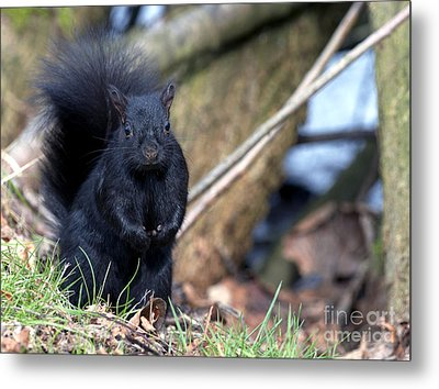 Blackie Metal Print by Sharon Talson