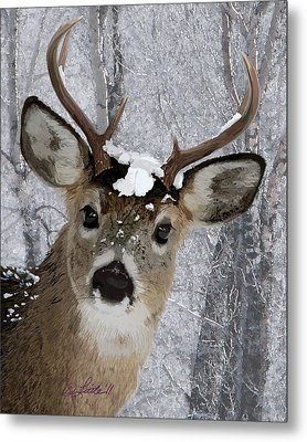 Blacktail Buck In Snow Metal Print