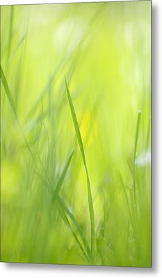 Blades Of Grass - Green Spring Meadow - Abstract Soft Blurred Metal Print
