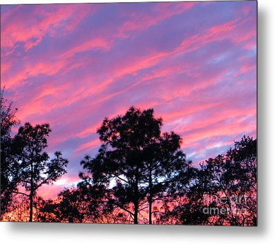 Metal Print featuring the photograph Blazing Pines by Joy Hardee