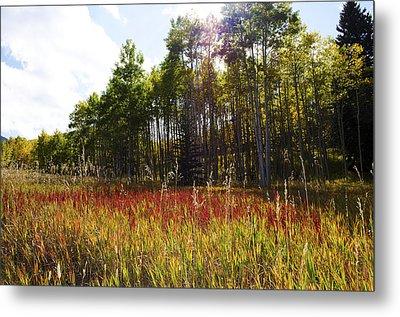 Blazing Red Grass In Colorado Metal Print