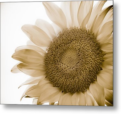 Bleached Sunflower Metal Print