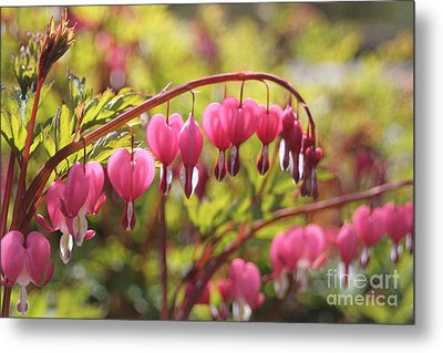 Bleeding Heart Metal Print by Barbara Bardzik