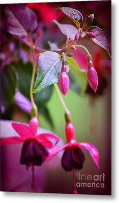 Bleeding Hearts Metal Print by Denise Tomasura
