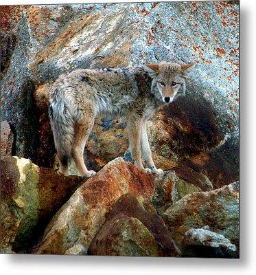 Blending In Nature Metal Print by Karen Wiles