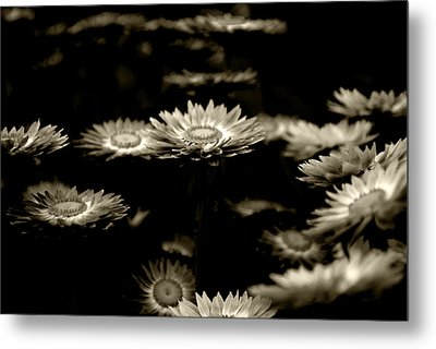 Blessed Flowers Metal Print by Sumit Mehndiratta
