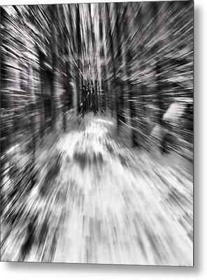 Blizzard In The Forest Metal Print by Dan Sproul