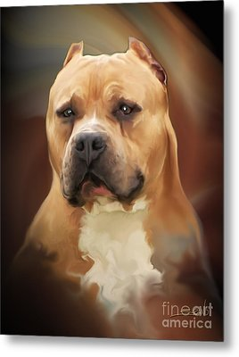 Blond Pit Bull By Spano Metal Print by Michael Spano