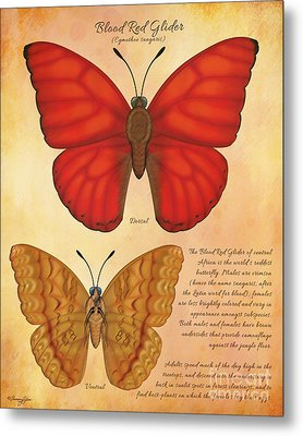 Blood Red Glider Butterfly Metal Print by Tammy Yee