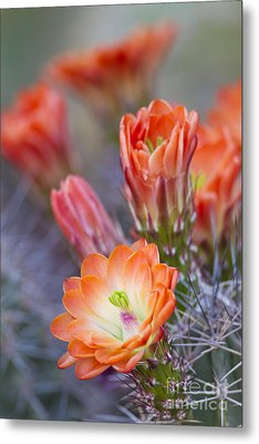 Metal Print featuring the photograph Bloom In Orange by Bryan Keil