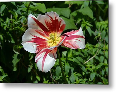 Metal Print featuring the photograph Bloom by Tara Potts
