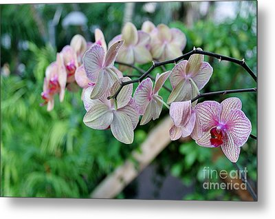 Bloomin' Metal Print by Butch Phillips