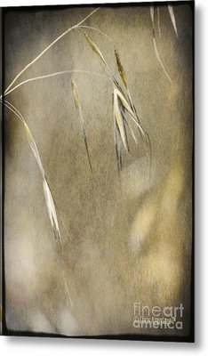Metal Print featuring the photograph Blooming And Seeding by Chris Armytage