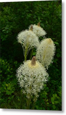 Blooming Bear Grass Metal Print