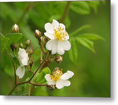 Blooming Metal Print by Lynn Berney