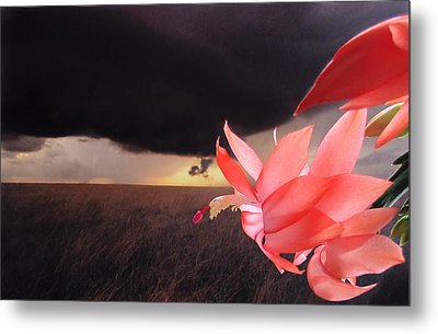 Blooms Against Tornado Metal Print