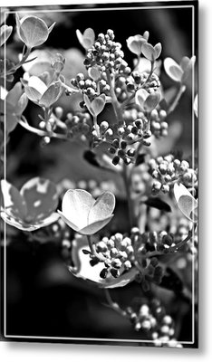 Blooms And Berries In Black And White Metal Print