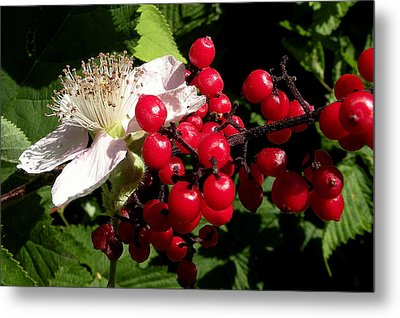Blossom And Berries Metal Print