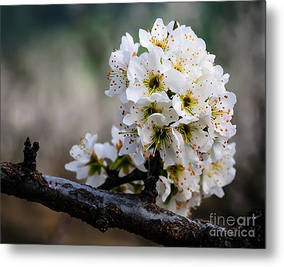 Blossom Gathering Metal Print by Terry Garvin