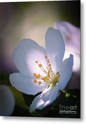 Blossom In The Sun Metal Print