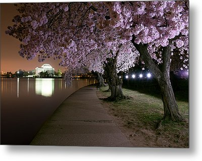 Blossom Night Fever Metal Print by Bernard Chen