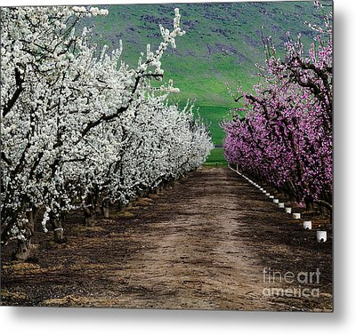 Blossom Standoff Metal Print by Terry Garvin