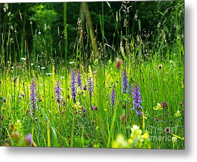 Metal Print featuring the photograph Blossom Summer Meadow by Kennerth and Birgitta Kullman