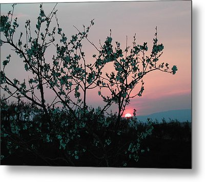 Blossom Sunset Metal Print by Dorothy Berry-Lound