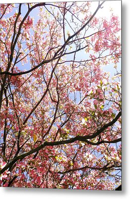 Blossoming Pink Metal Print by Robyn King