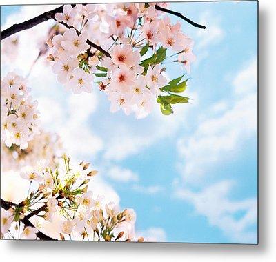 Blossoms Against Sky, Selective Focus Metal Print