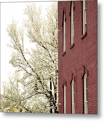 Metal Print featuring the photograph Blossoms And Brick by Courtney Webster
