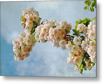 Blossoms And Clouds Metal Print