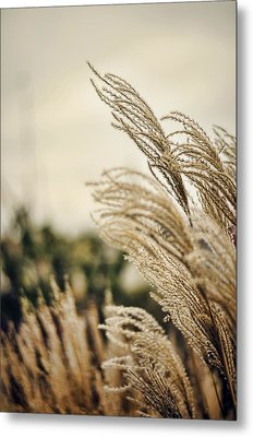 Blowing In The Wind Metal Print by Heather Applegate