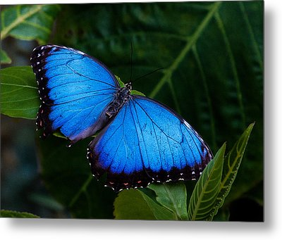 Blue And Black On Green Metal Print