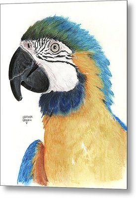 Blue And Gold Macaw Metal Print by Heather Gessell