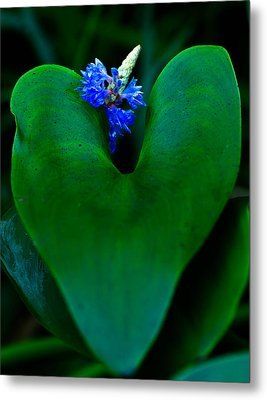 Blue And Green Metal Print by Haren Images- Kriss Haren