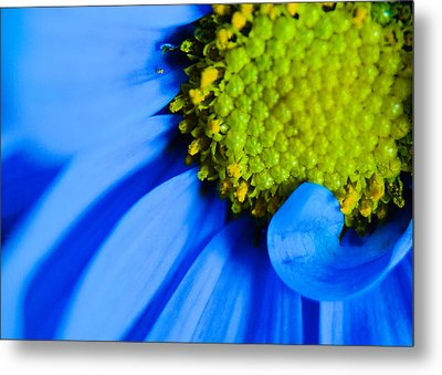 Blue And Yellow Metal Print by Erin Kohlenberg