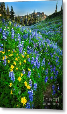 Blue And Yellow Hillside Metal Print