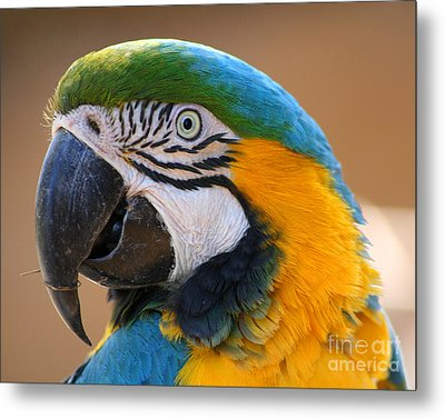 Metal Print featuring the photograph Blue And Yellow Macaw by Bob and Jan Shriner