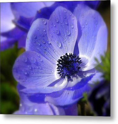 Metal Print featuring the photograph Blue Anemone by Martina  Rathgens