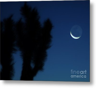 Metal Print featuring the photograph Blue by Angela J Wright