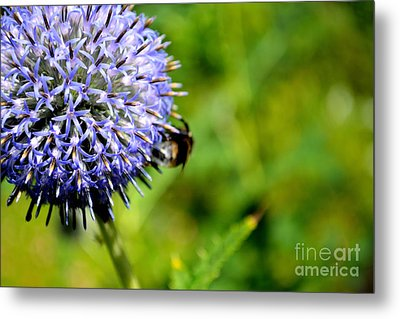 Metal Print featuring the photograph Blue Ball Flower by Scott Lyons