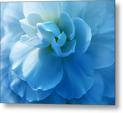 Blue Begonia Flower Metal Print by Jennie Marie Schell