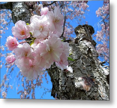 Blue Behind Pink Metal Print by Heidi Manly
