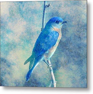 Blue Bird Blue Sky Metal Print