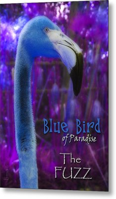 Metal Print featuring the photograph Blue Bird Of Paradise - The Fuzz by Barbara MacPhail