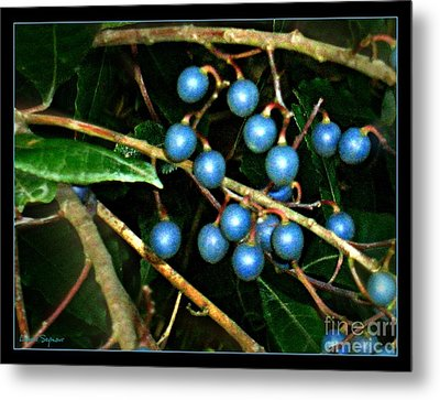 Metal Print featuring the photograph Blue Bush Berries  by Leanne Seymour