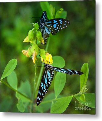 Blue Butterflies In The Green Garden Metal Print by Regina Koch