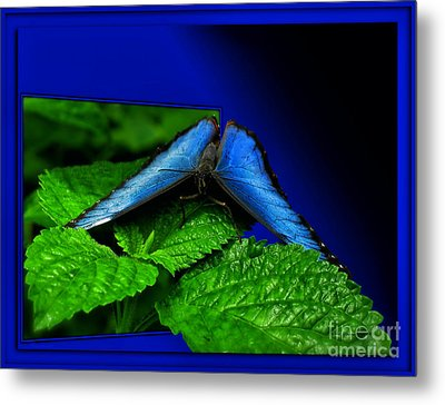 Blue Butterfly 02 Metal Print by Thomas Woolworth