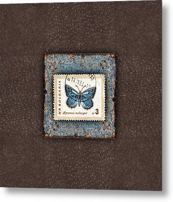 Blue Butterfly On Copper Metal Print